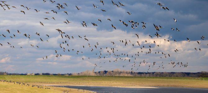 Am Rande des Ruhrgebiets – Das Naturparadies Bislicher Insel in Xanten