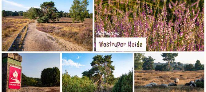 Ausflugstipp – Die Westruper Heide in Haltern am See
