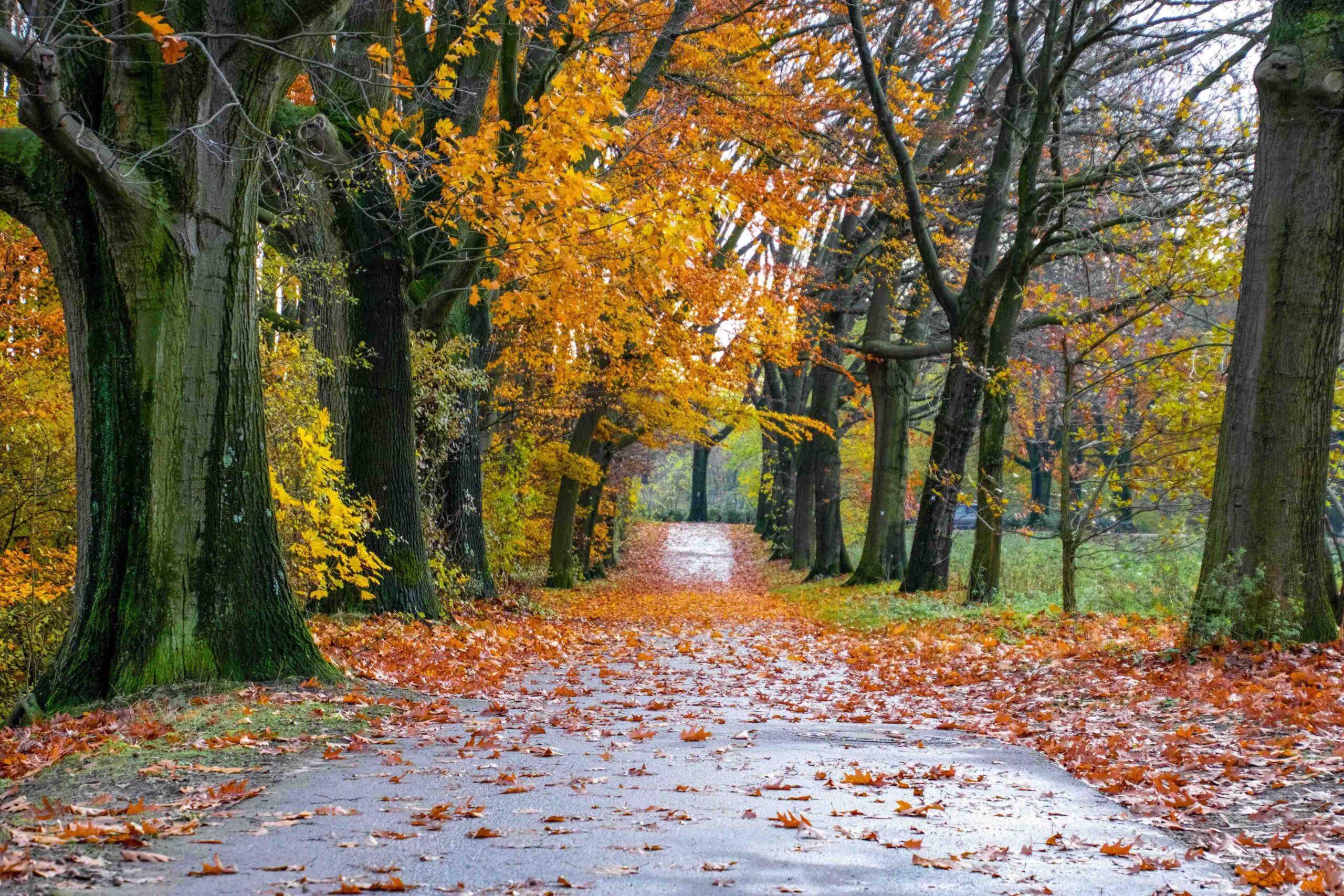 10 Tipps für schöne Herbstspaziergänge im Ruhrgebiet